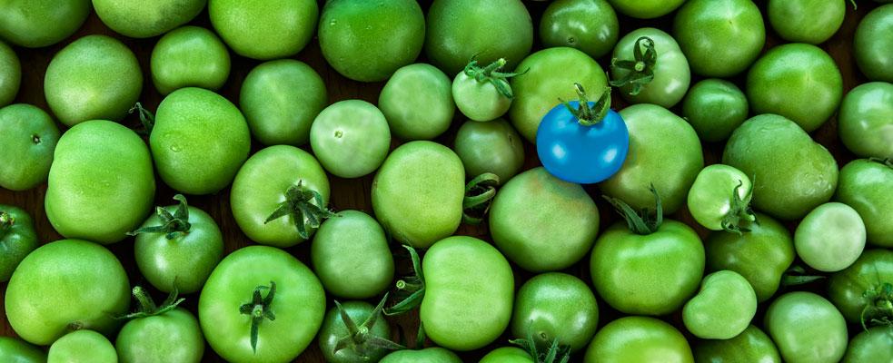 tomate-azul
